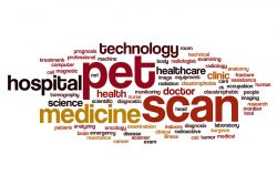 A word cluster with reds and yellows featuring the words pet scan, medicine, and other associated terms.